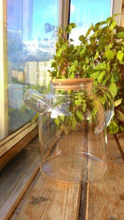Стеклянный чайник с фильтром с AliExpress на фото
