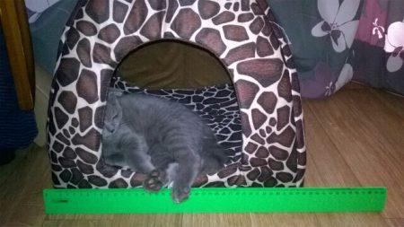 Домик для домашнего питомца с AliExpress котик внутри